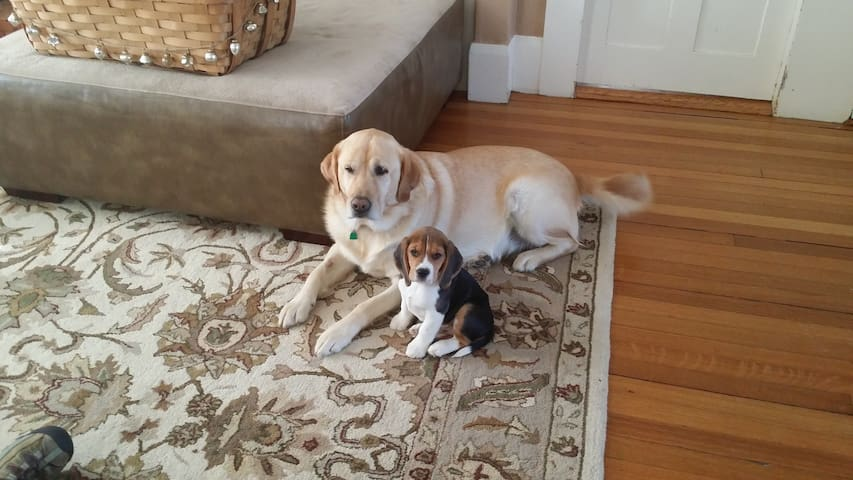 Scooby and baby Louie