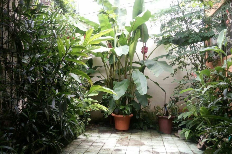 Jardín externo. Desde la habitación tienes acceso a esta preciosa área de la casa.