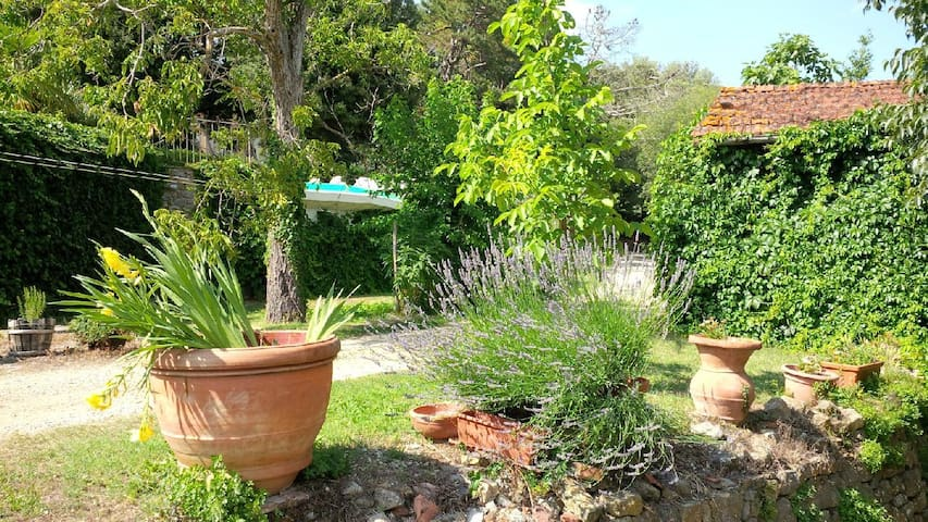 Lemons house in Tuscany with pool - Pieve A Presciano - Casa