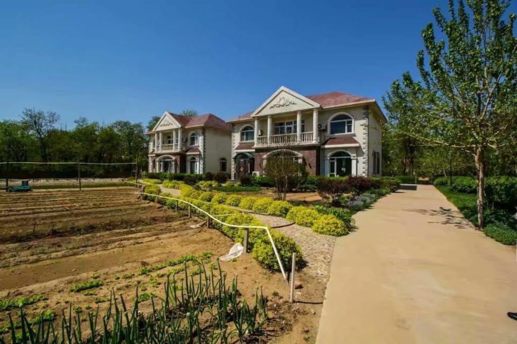 一共俩个别墅,院子很大,里面种了各种蔬菜,还有很多树