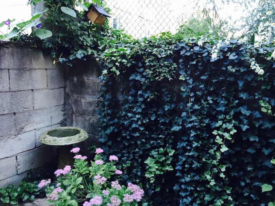 Back Yard in Summer Bloom