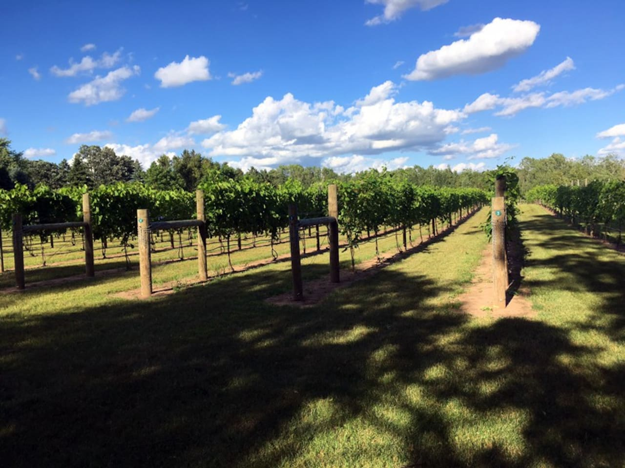 Guests are welcome to walk the vineyards or relax under a tree and read.