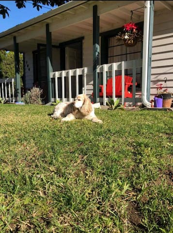 A guest sent us a photo of her dog sunning in the yard. They've both been back to stay at least three times and are one of our favorite guests of all time.
