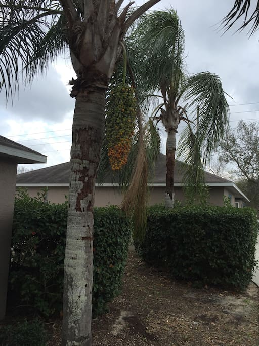 Florida outdoor feel.