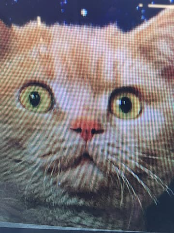 Test listing space cat - Jordan Valley - Leilighet