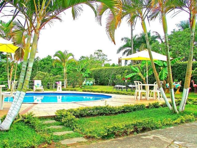 una piscina en  medio de platanera y palmas