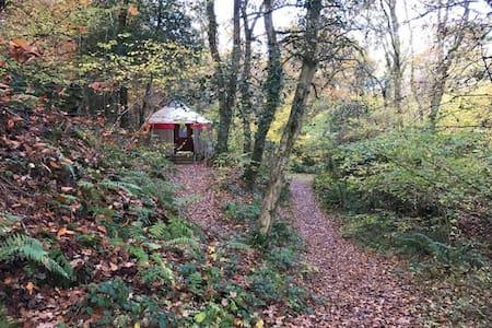 Oke Tor - Small Yurt 18 Woodland - Newton Abbot