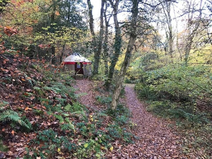 Tranquil Double Woodland Yurt