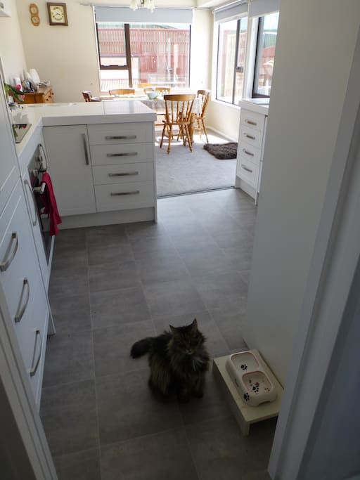 Kitchen but we no longer have the cat