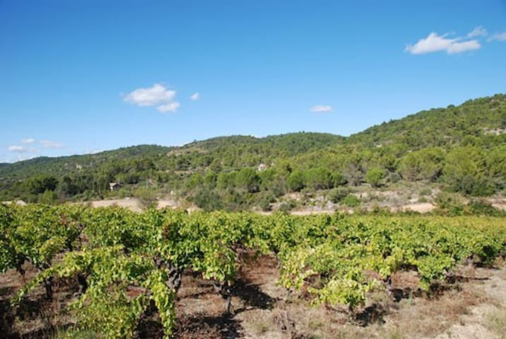 surrounding vineyards