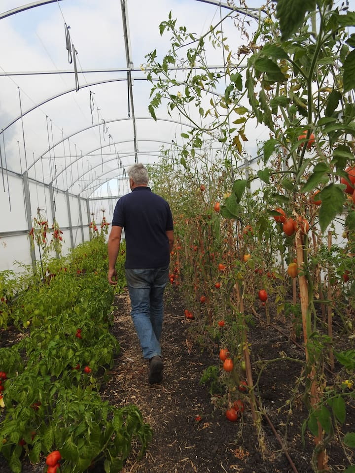 Poly Tunnels full of seasonal produce