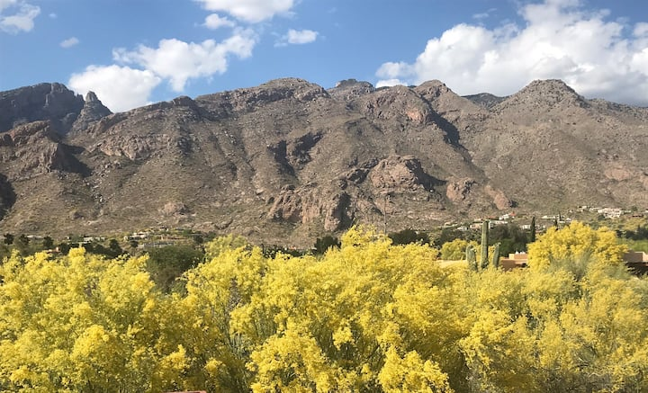 Catalina Foothills Paradise! Views! Location!