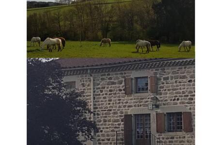 Le gite et les chevaux du vignal