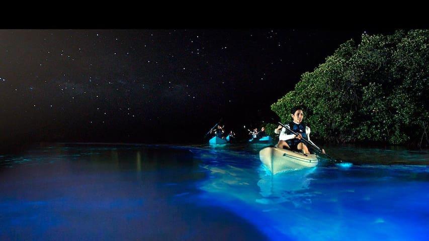 Luminescent Bio Bay