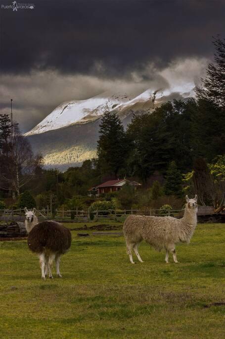Vista Volcán Calbuco