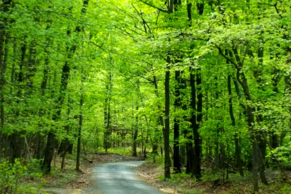 Travel up the gravel lane, through the woods...