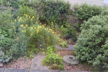 Can you spot the millstone in the garden?