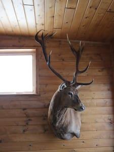 Wapiti Mountain Cabin NY - Nesconset - Haus