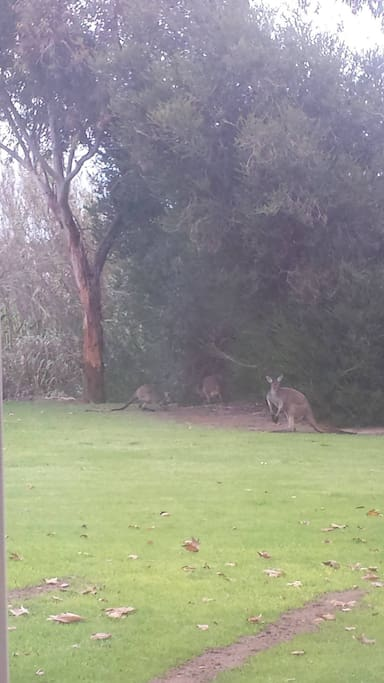 Our winter furry visitors on the back lawn...hopefully well see them again this year.