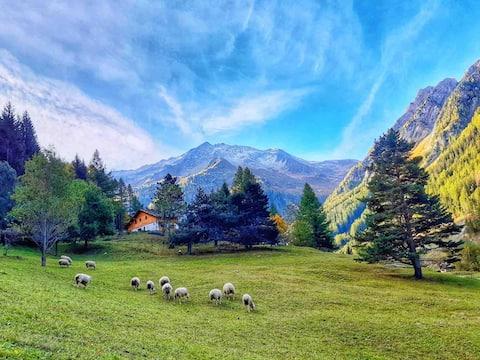 Nature,ballade, famille, liberté, 20'000m2 terrain