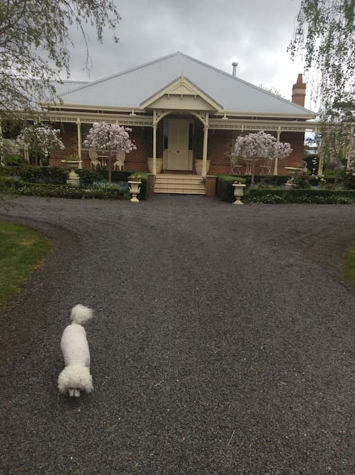 "The front of the home , plus ""Ella"" my Bichon Frise"