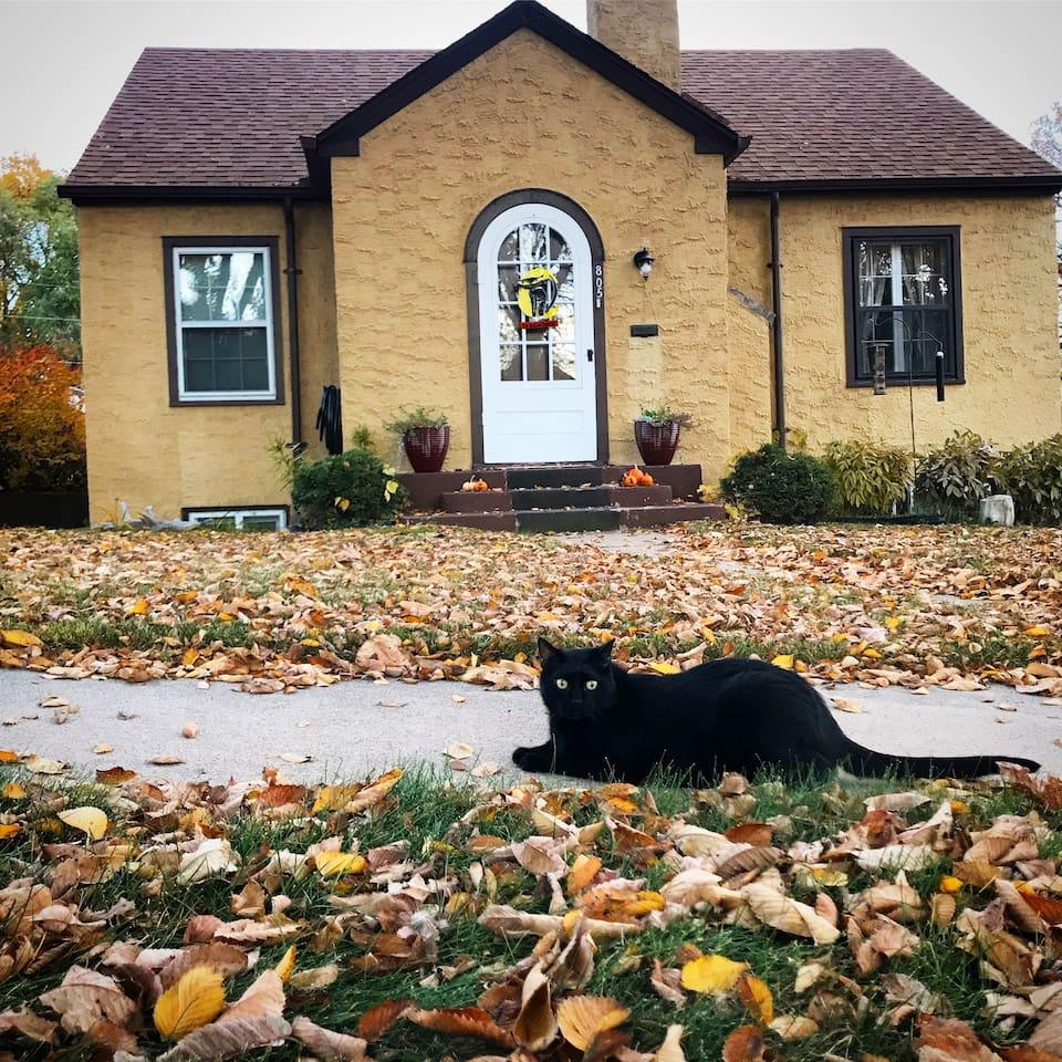 George the guard cat.