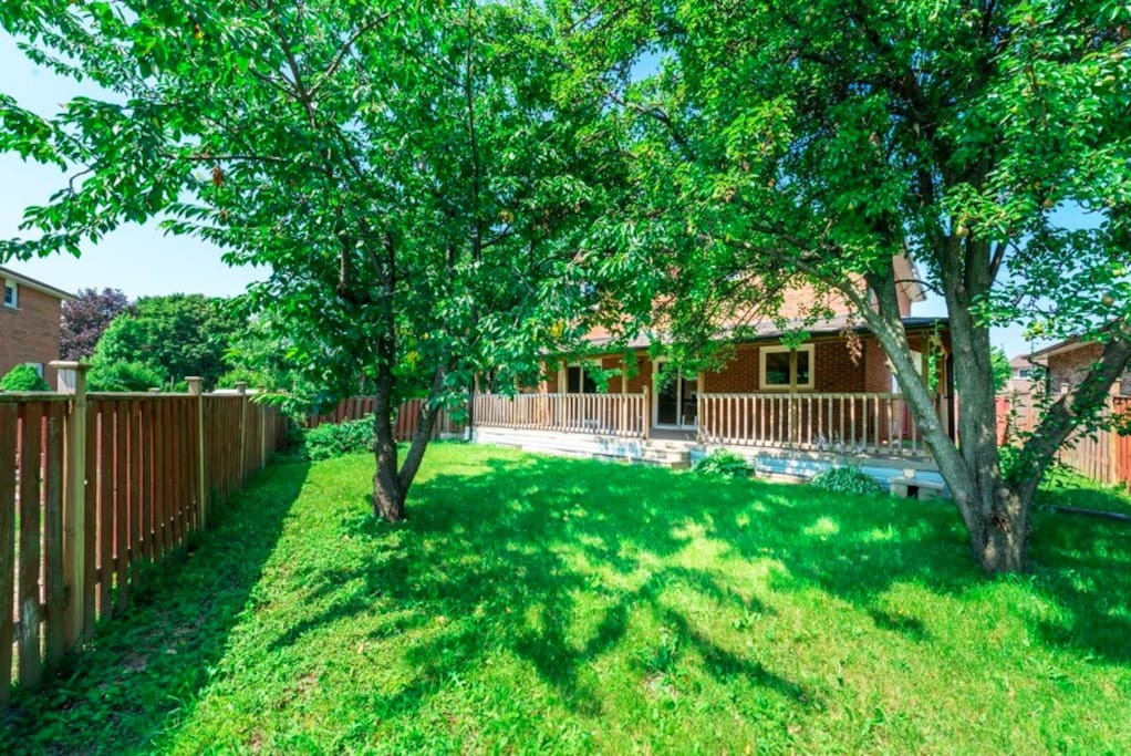 Huge private backyard! With cherry and apple tree!