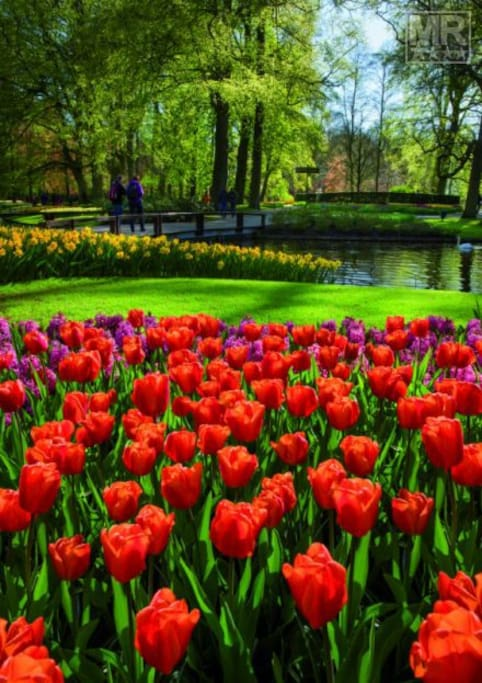 The Keukenhof open from 22 March to 13 May in Lisse, only 10 kilometres from Haarlem