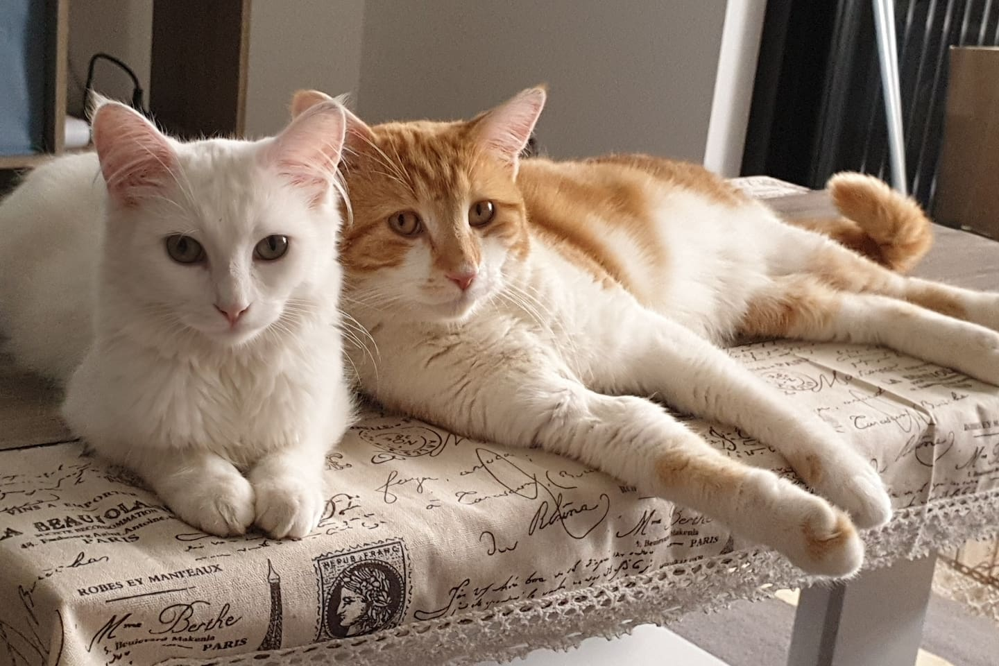 We have 2 lovely cats. We now keep them at balcony for guest's comfort and hygenic.  PLEASE DO NOT BRING THEM INSIDE THE HOUSE.  WE WILL SEND SOMEONE AT 6:30PM everyday to clean their cat litter and to feed them.