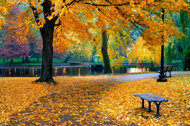 Vondelpark in autumn