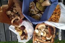 För den som gillar svamp är området runt oss perfekt, varje säsong hittar vi massor häromkring.