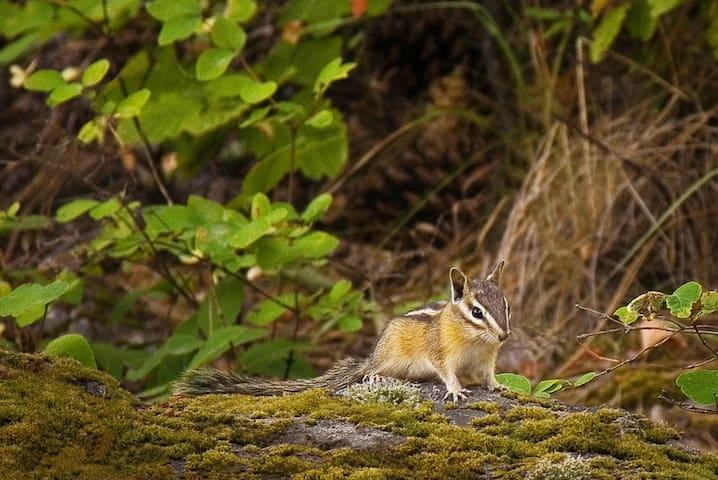 Ferocious wild life!