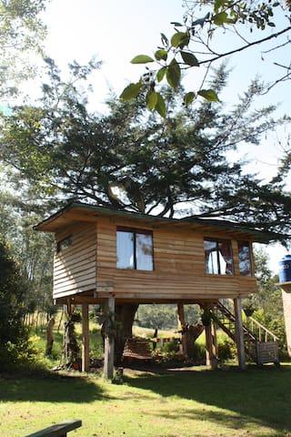 Casa en el Arbol, Monte Verde Cabañas y Camping