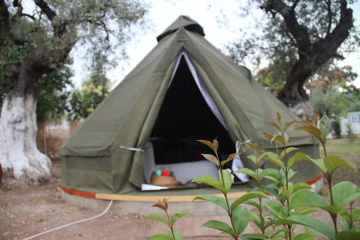 COB Tent