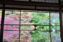 瑠璃光院的风叶