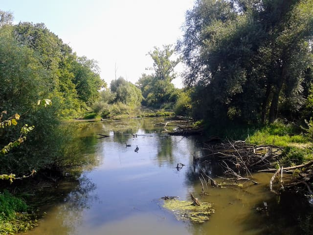 Michelsbach im nahegelegenen Naturschutzgebiet.