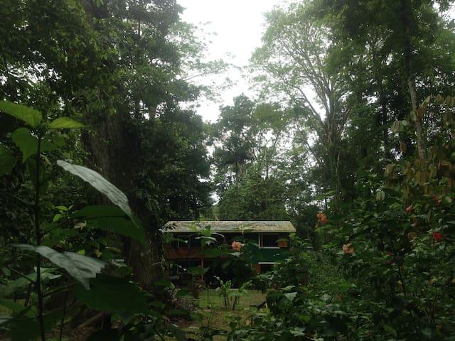Full equpped Jungle Green House (PlayaChiquita) - Playa Chiquita  - Haus