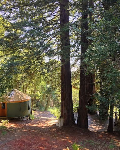 Yurt under the Redwoods at Mountaintop Eco-Retreat