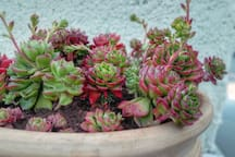 plants on rooftop