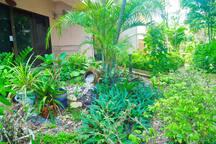 Garden in front of the room