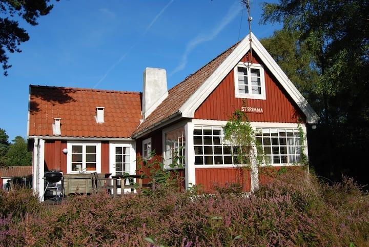 Senaste nytt från Skåne