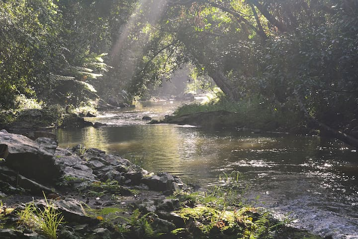 Mountain fed pristine Utchee Creek at your doorstep is the perfect private swimming hole