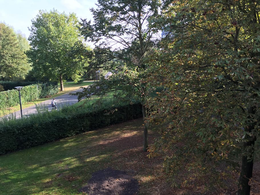 View on the park from the bedroom window