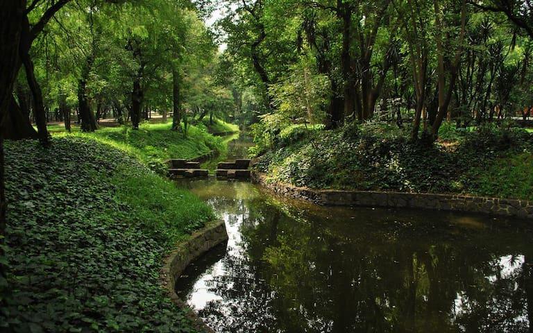 Loft con un bosque de Chapultepec
