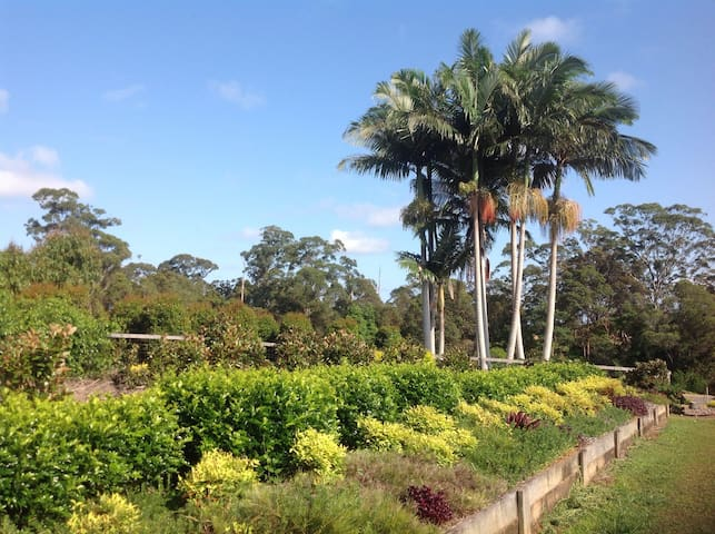Cooroy No Worries - Cooroy - Bungalow