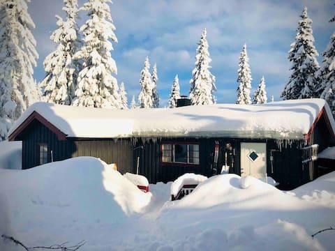 Περιοχή Sjusjøen | Cross-country skiers paradise