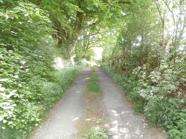 A view as you approach the house down our little lane