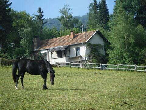 Haus für Reiter, Natur- und Hundefreunde