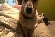 Julia the hound dog