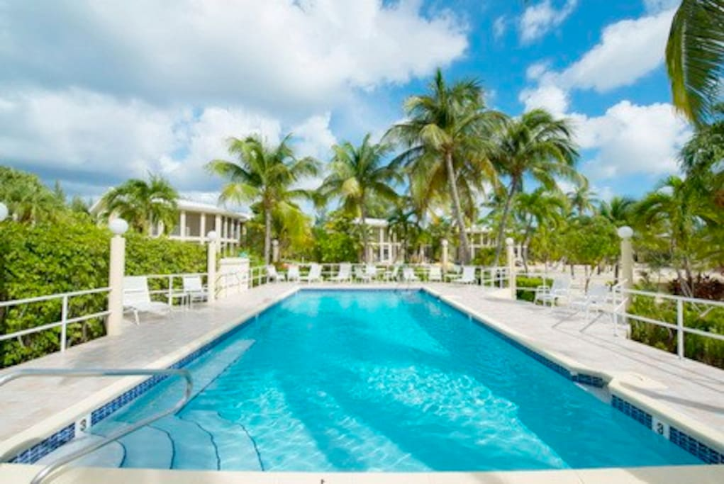 """Enjoy the beautiful pool and majestic palm trees"